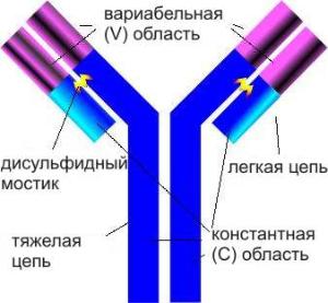 антитоксин столбнячный рлс